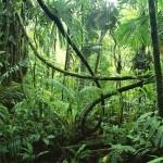 JSCRainforest